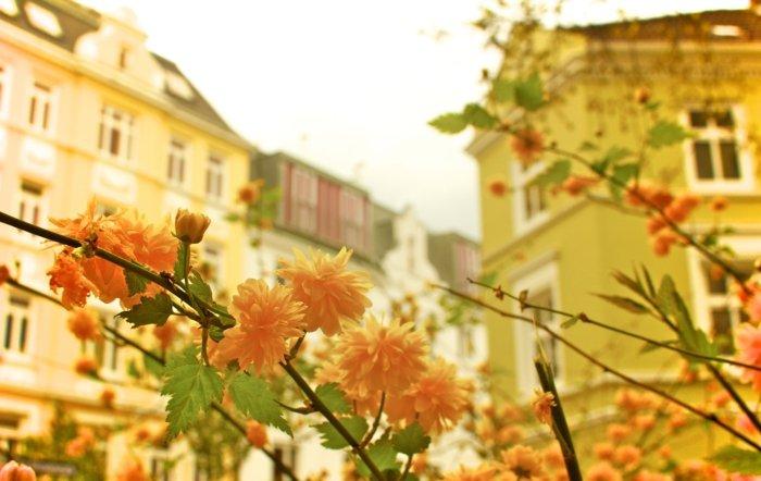 herrliche-Frühlingsanfang-Bilder-von-der-Stadt