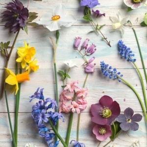 Die lila Blumen sind Symbol der Weiblichkeit