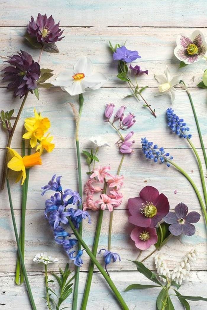 herrliche-Frühlingsblumen-Narzissen-Osterglocken-Hyazinthen