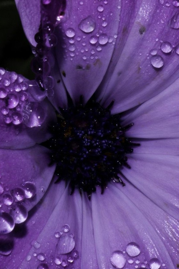 lila-Blume-mit-Regentropfen-auf-den-Blättern