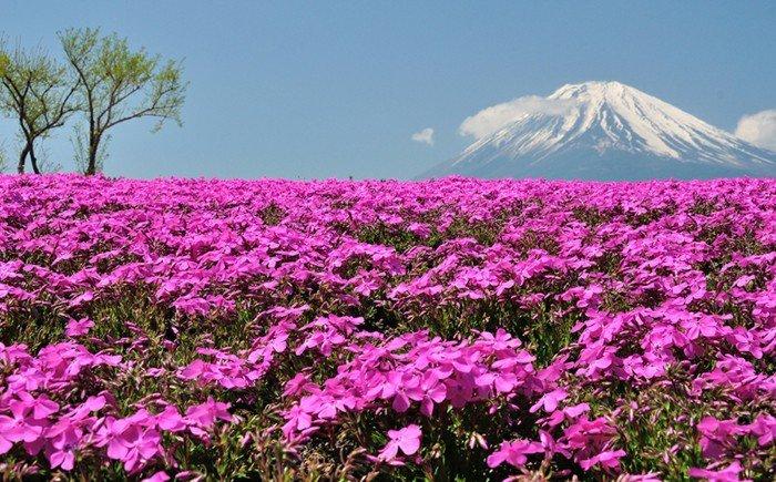 lila-Blumen-an-einem-großartigen-Hintergrund