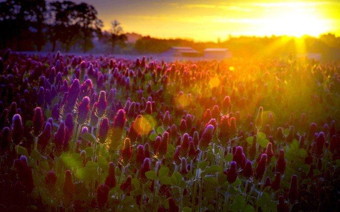 lila-Blumen-beleuchtet-von-der-Sonne