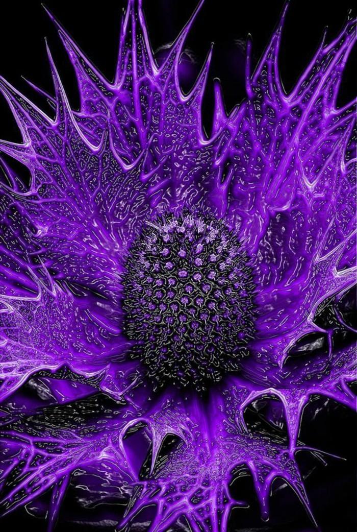 mysteriöse-exotische-Blumensorten-Seestechpalmen-in-lila-Farbe