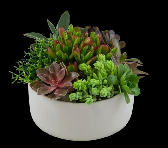 pflegeleichte-pflanzen-in-weißem-blumentopf