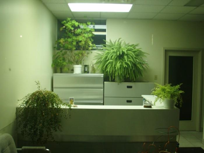 pflegeleichte-pflanzen-mit-hängenden-blättern