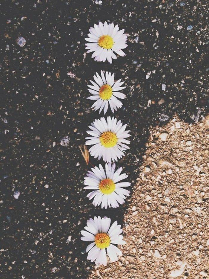 romantische-Frühlingsanfang-Bilder-sympatische-Gänseblümchen