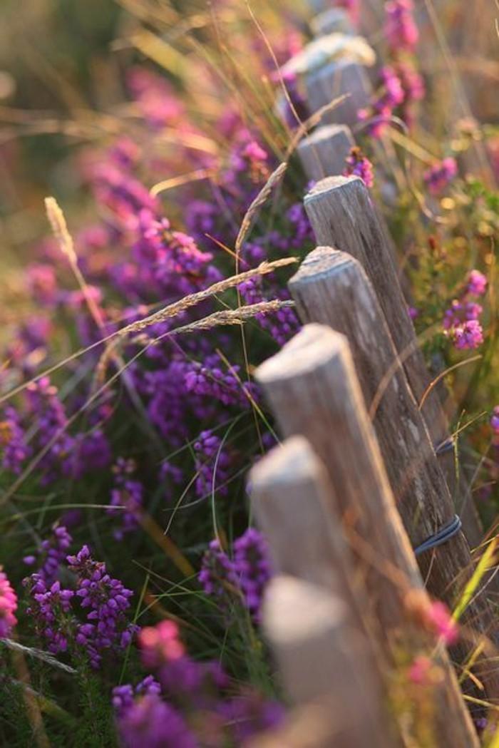romantisches-Foto-von-Feld-mit-Blumen