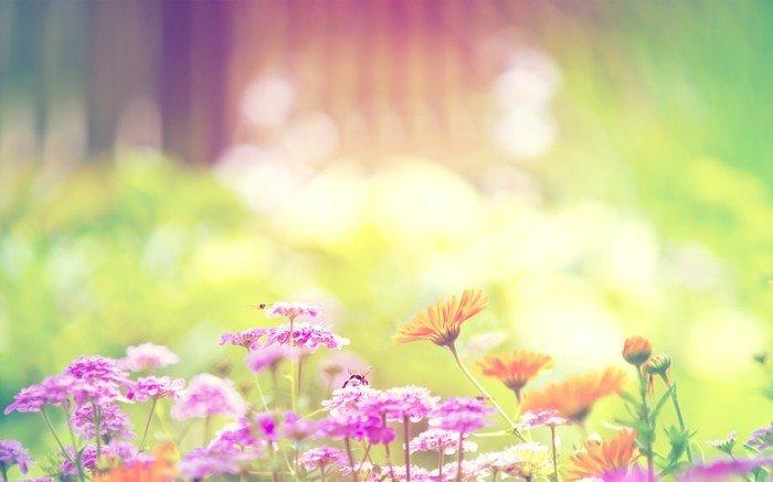romantisches-Frühlingsbild-Biene-auf-Blume