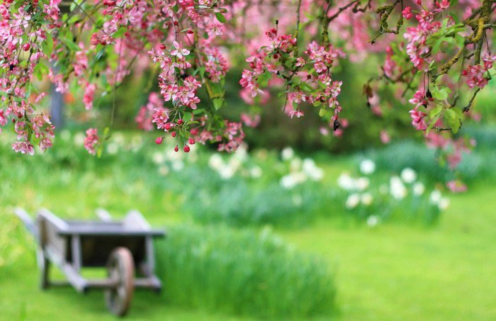 rosa-Blüten-Anfang-des-Frühlings