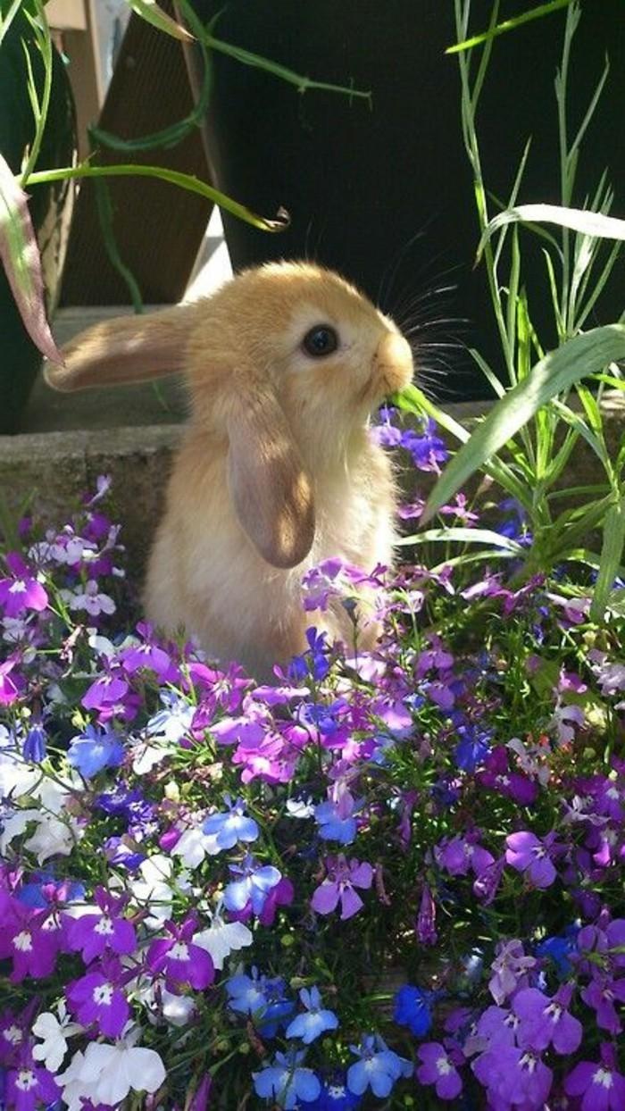süßes-Foto-Hase-unter-den-Frühlingsblumen