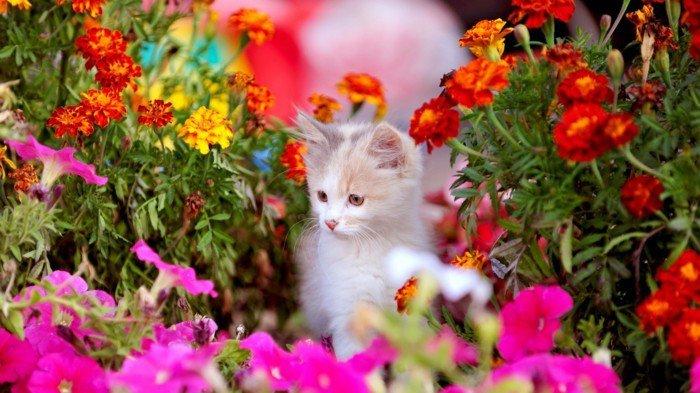 süßes-Foto-von-Kätzchen-laufend-durch-die-Blumen