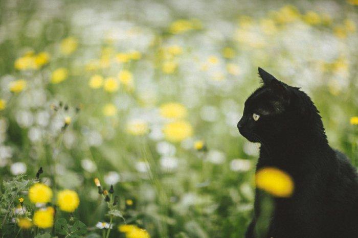 süßes-Frühlingsbild-Katze-im-Gras