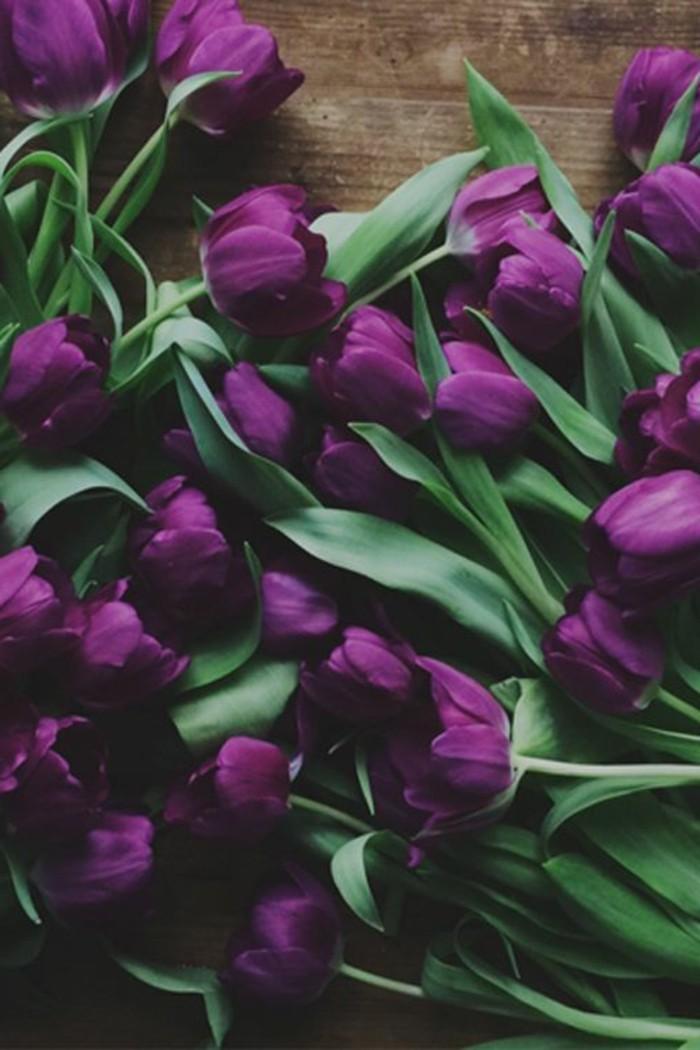 schöne-Komposition-aus-lila-Tulpen