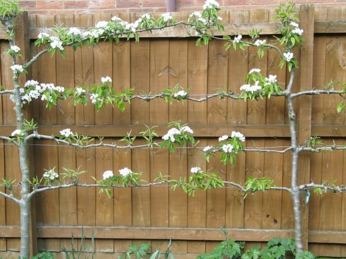 terrassen-ideen-schöne-pflanzen-auf-dem-zaun-kreative-ausstattung