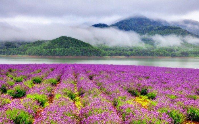 unikales-Foto-Wald-Gebirge-Nebel-Feld-mit-lila-Blumen