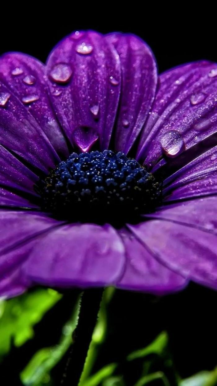 unikales-Foto-von-lila-Blume-mit-Regentropfen-auf-den-Blättern