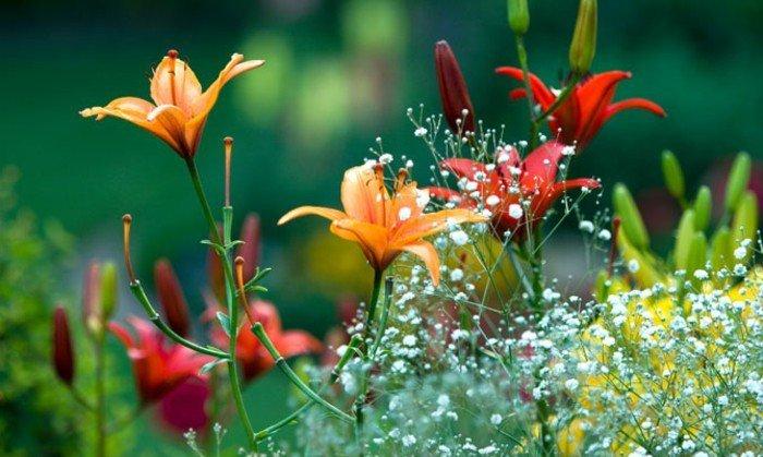 wunderschöne-Blumen-am-Anfang-des-Frühlings