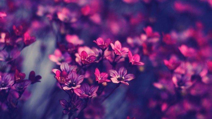 zärtliche-Blumen-in-lila-und-rosa-Nuancen