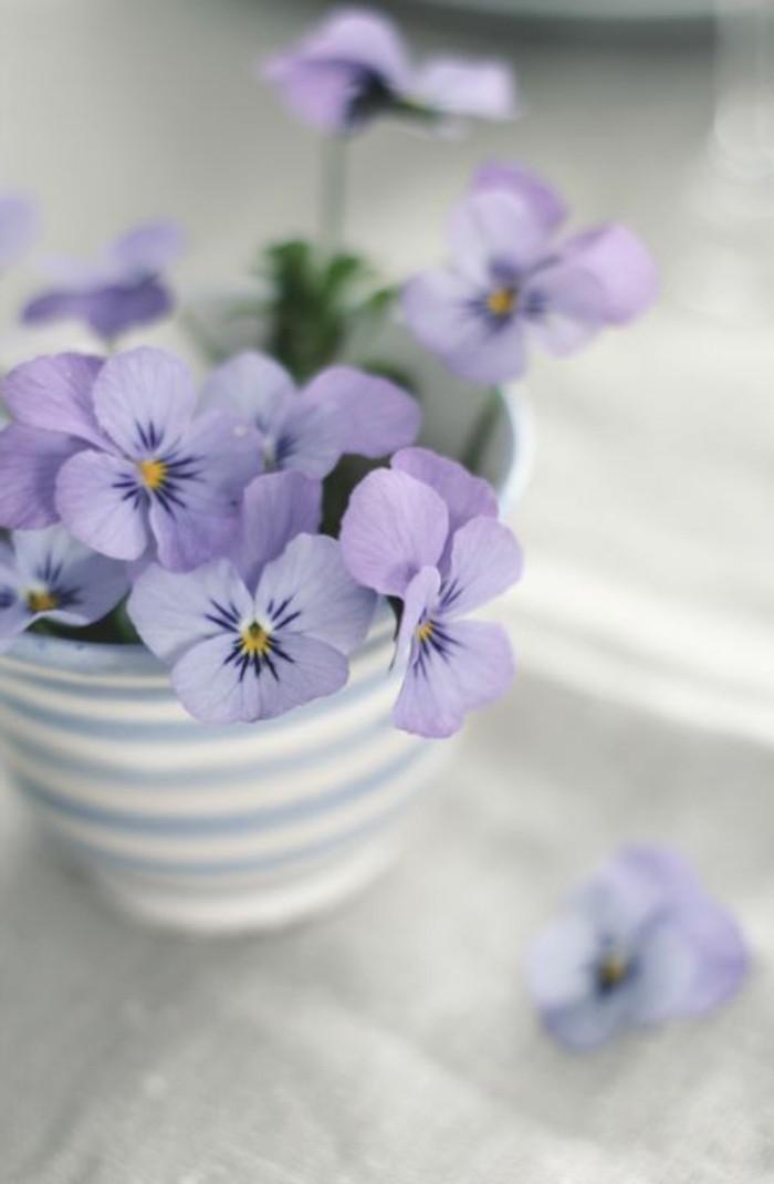 zärtliche-Topfblumen-fürs-Zuhause-lila-Veilchen