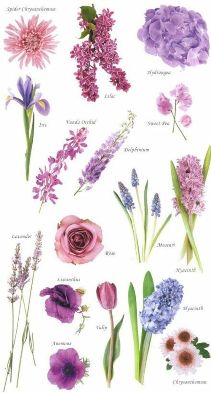 zahlreiche-Blumensorten-mit-lila-Färbung