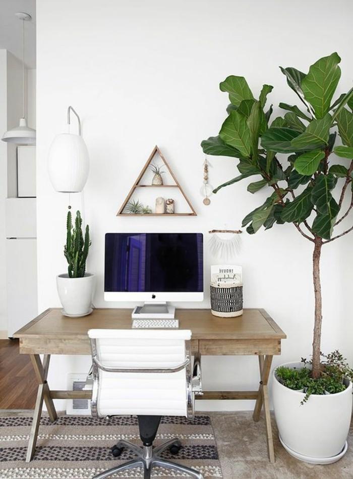zwei-büropflanzen-eine-große-mit-breiten-Blättern-und-die-zweite-kleiner