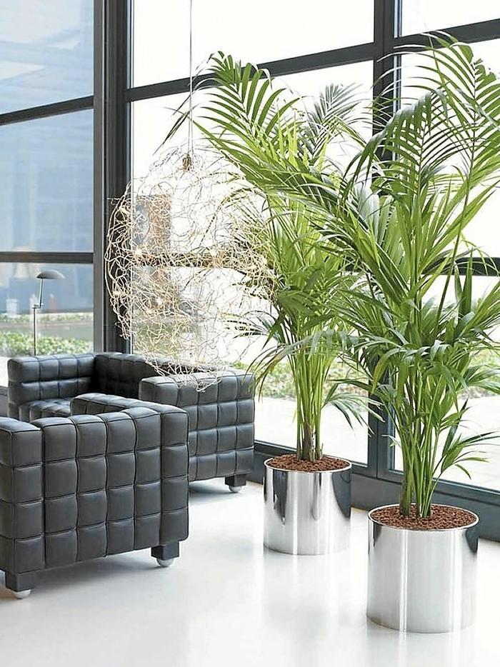 zwei-große-Büropflanzen-mit-scharfen-Blättern