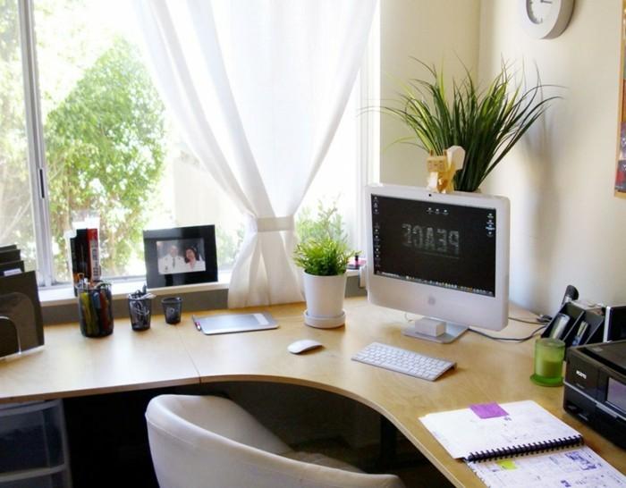 zwei-pflegeleiche-pflanzen-vor-und-hinter-dem-Computer