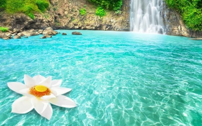 Bilder-von-Wasserfällen-mit-einer-Blume