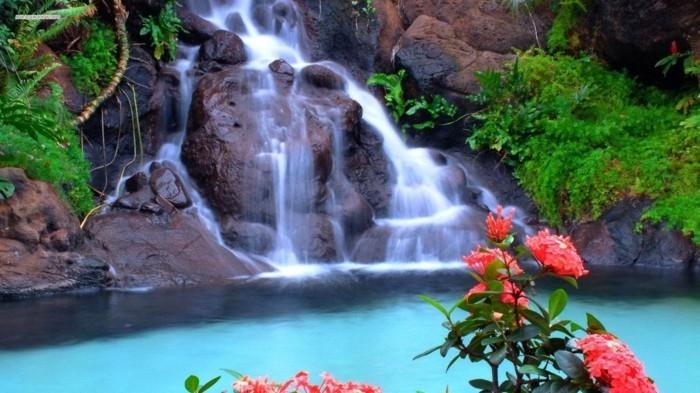 Bilder-von-Wasserfällen-mit-rosa-Blumen