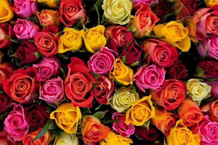 Blumensträuße-Bilder-mit-Rosen-in-vielen-Farben