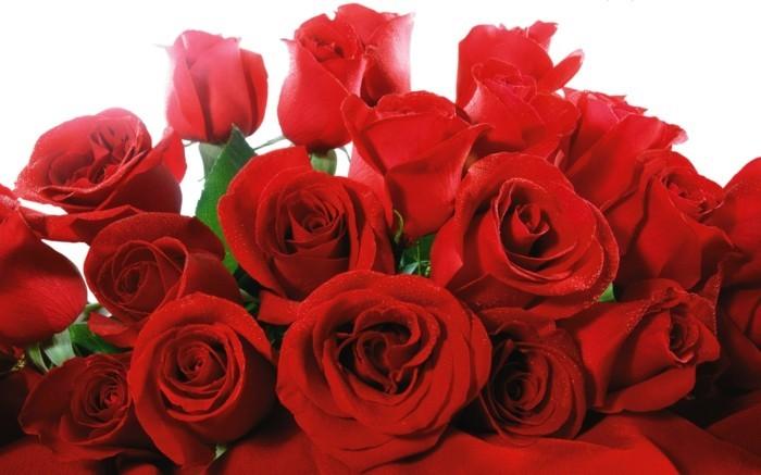 Blumensträuße-Bilder-nur-von-roten-Rosen