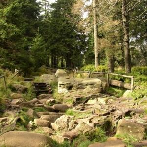 Urlaub im Harz - ein unerwartetes Abenteuer