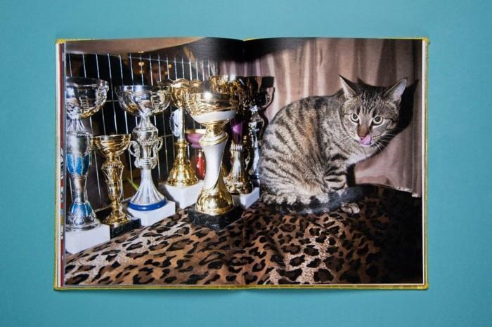 Fotoalben-Gestalten-mit-der-Katze