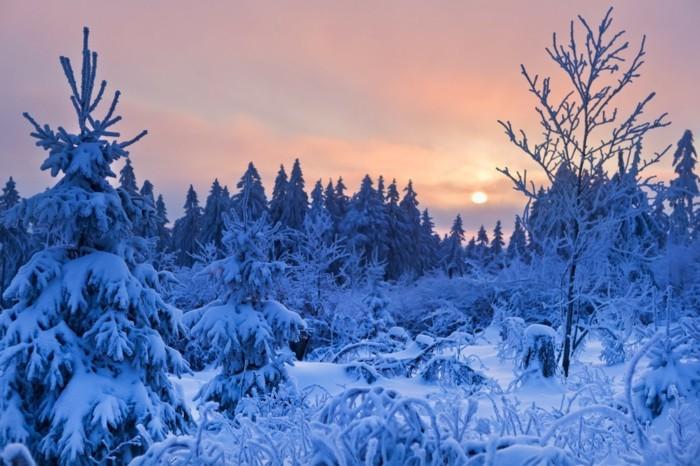 Kurzurlaub-über-Silvester-der-Winter-ist-schön-im-Harz