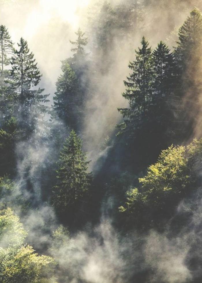 Landschaftsbilder-ein-Wald-bei-Nebel-wunderbar-aussehend
