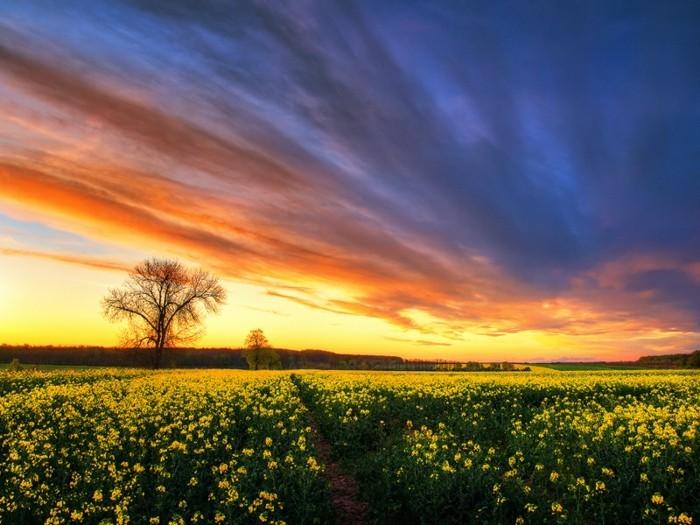 Landschaftsfotografie-auf-einem-Feld-mit-gelben-Blumen