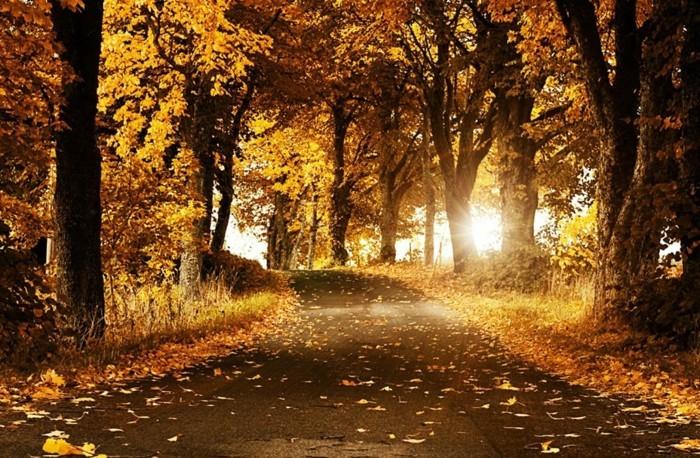 Poster-Landschaft-einen-Weg-im-Herbst