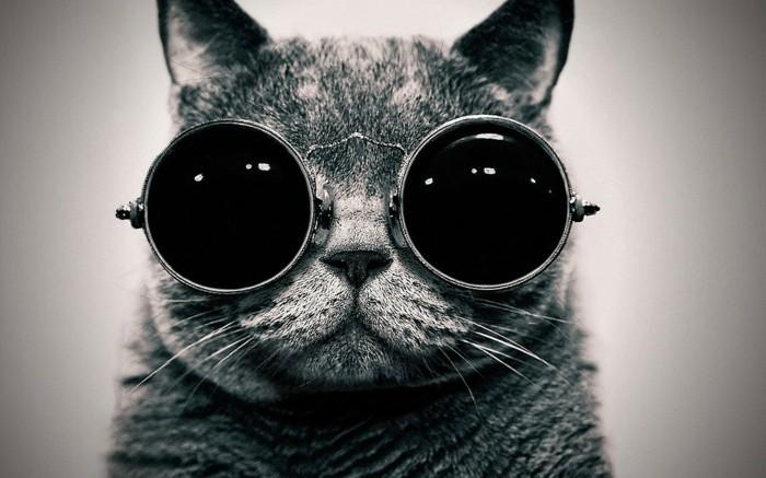 Runde-Sonnenbrille-auf-einer-Katze
