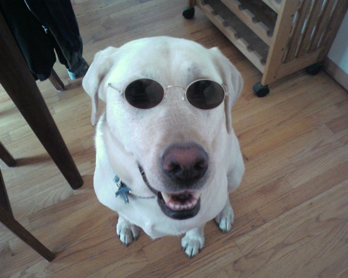 Runde-Sonnenbrille-sehr-lustige-Situation