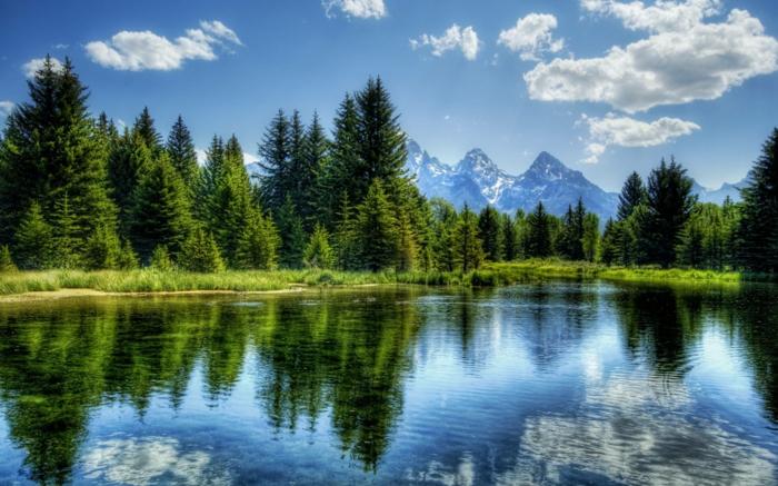 Schöne-Landschaftsbilder-mit-grünen-Kiefern