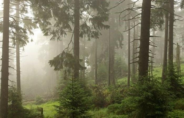 Urlaub-im-Harz-ein-Wald