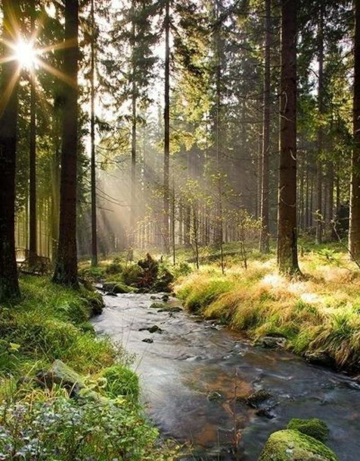 Urlaub-im-Harz-ein-wunderbarer-Fluss