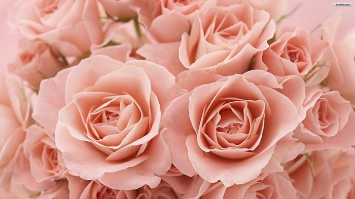 Wandbilder-Rosen-mit-vielen-Blühten