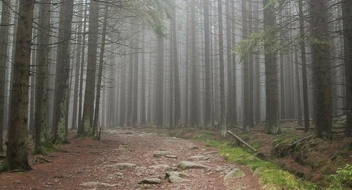Wanderurlaub-Harz-bei-dichter-Nebel