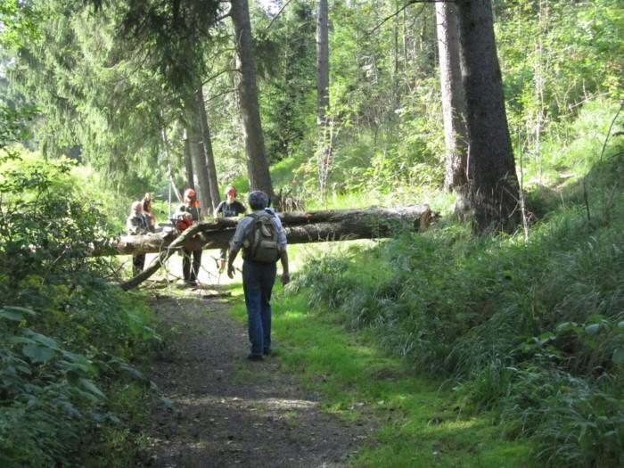 Wanderurlaub-Harz-mit-Bäumen-fallen