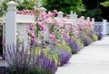Wie wirkt ein schöner Garten? Hier sind 50 Beispiele!