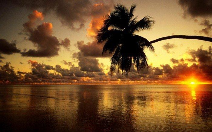 schöne-bilder-mit-sonnen-untergang-und-palm