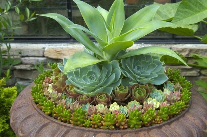sehr-interessante-grüne-pflanzen-kreative-schöne-gärten-gestalten
