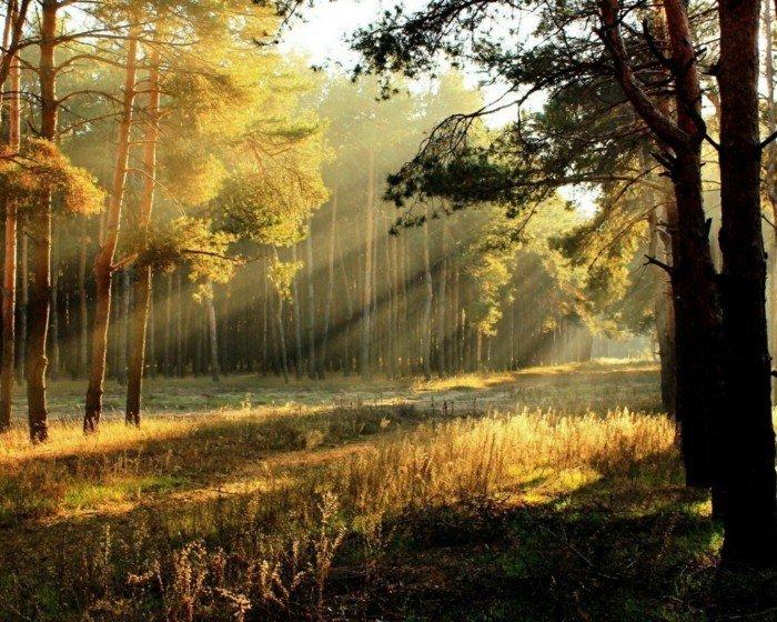 sonnen-aufgang-im-wald-schöne-bäume