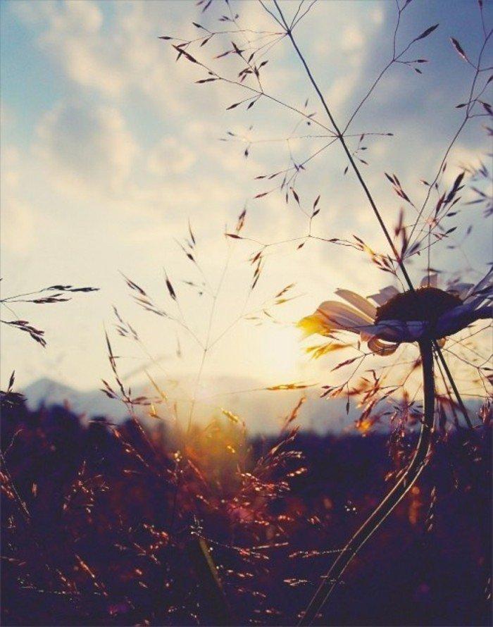 sonnenaufgang-schöne-blume